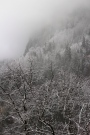 Alpine forests