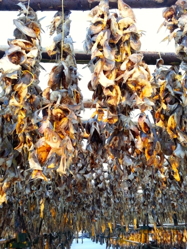 Dried fish farm - strangely captivating