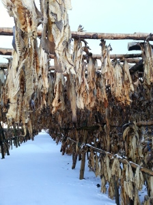 Dried fish farm