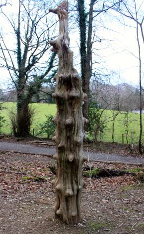 Funny knobbly tree