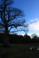 around Lingham Estate where Beatrix Potter spent her summers
