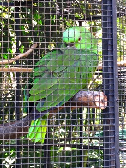 Zoological Simon Bolivar
