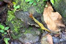 Spot the millipede
