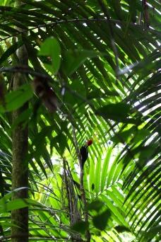 Spot the woodpecker