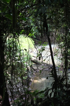 La Selva Biological Reserve