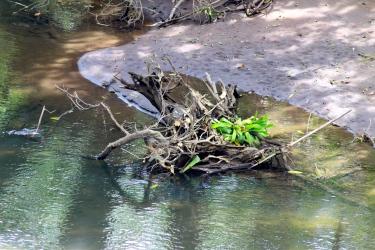 Spot the caiman