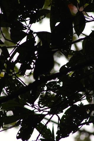 Spot the bird