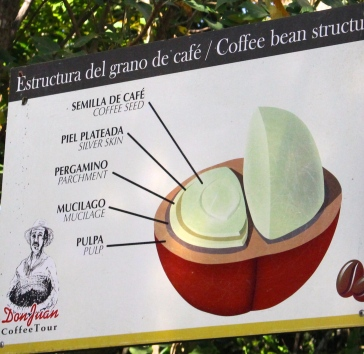 Coffee bean is only 20% of the fruit