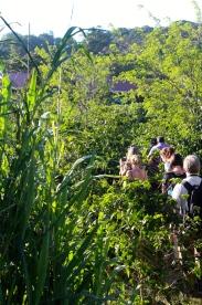 Walking through the coffee plantation