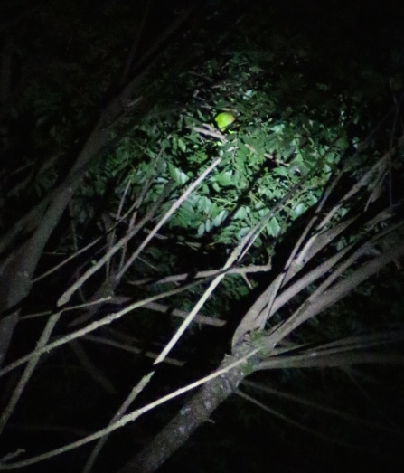 Can you spot the animal? No I couldn't either - Santamaria Night Walk