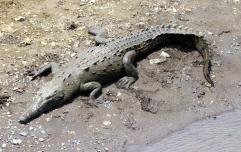 Traceless River Crocodiles