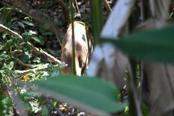 Spot the deer