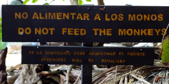 A little bit difficult not to feed the monkeys when they know how to open your rucksack!