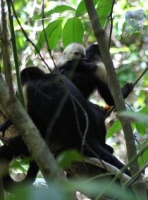 Monkey meeting