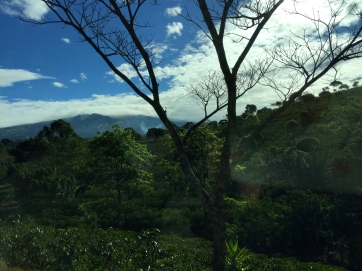 On way to Doka Coffee Plantation