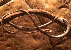 Brown Vinesnake