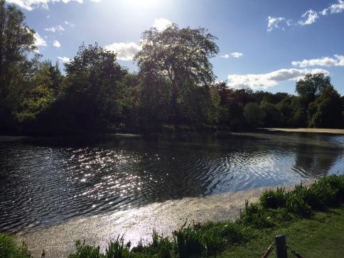 Beautiful lake at Buckingham Palace