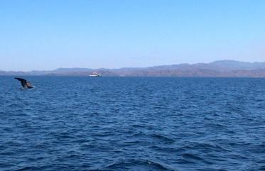 Journey to Isla Tortuga