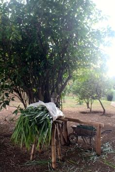 Orchard, Xandari Resort