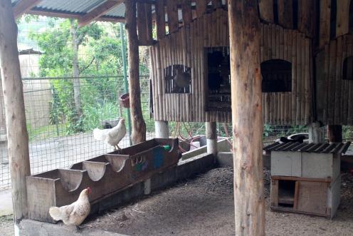Chickens, Xandari Resort