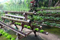 Fruit & Veg, Xandari Resort