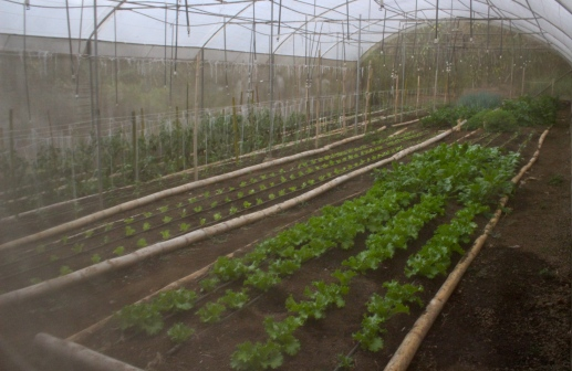 Home grown veg, Xandari Resort