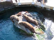 Seals, Living Coast, Torquay