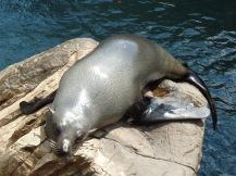 Seal, Living Coast, Torquay