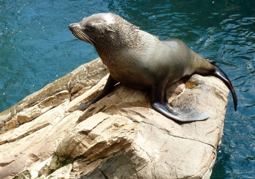 Seal, Living Coast, Torquay