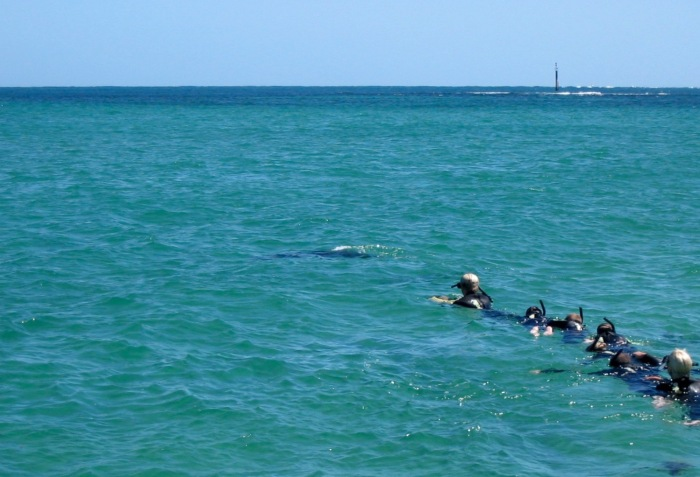 Rockingham - slowly approaching the dolphins - such an amazing experience