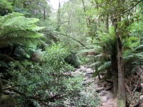 Great Otway National Park, Great Ocean Road