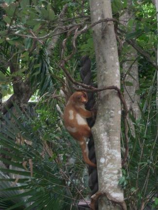 Cute Cuscus